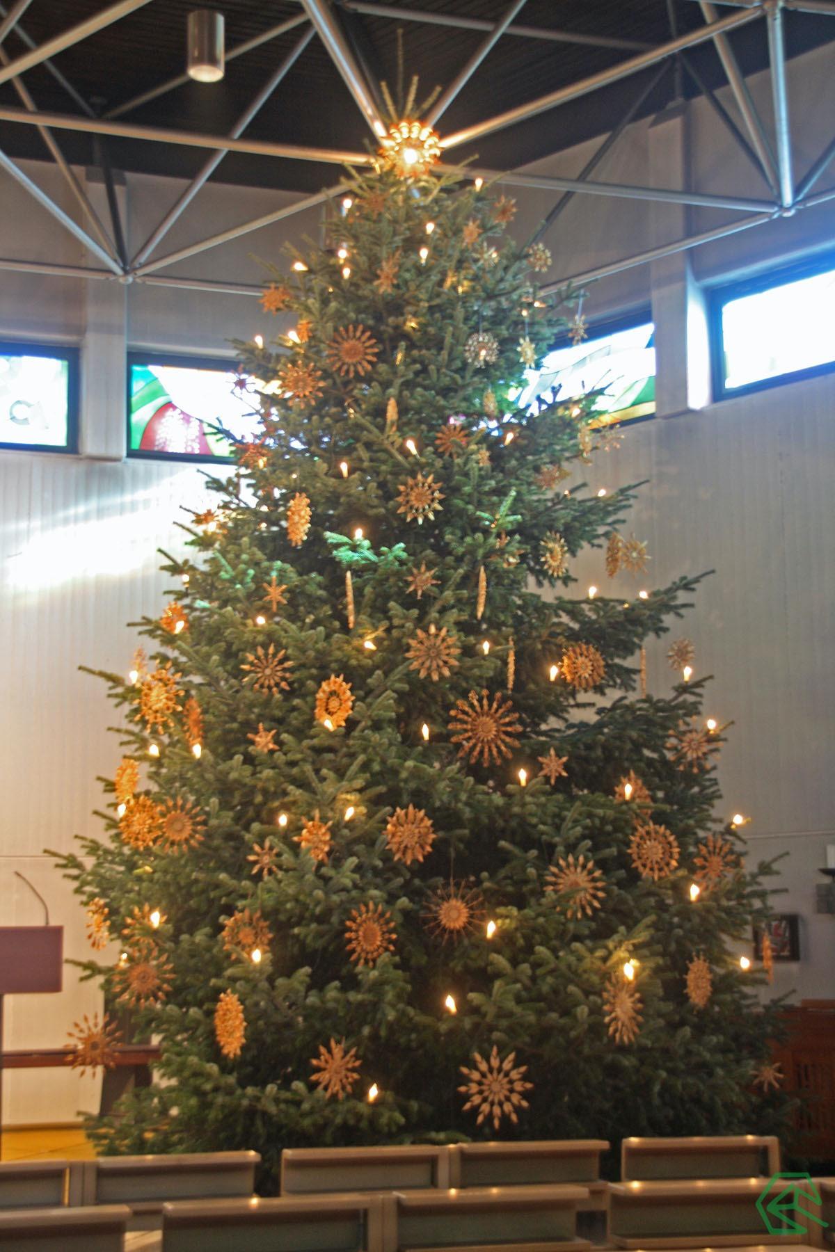Wer Hat Den Tannenbaum Erfunden.Impuls O Weh Tannenbaum St Johannes