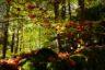 Impuls: Es ist Herbst!