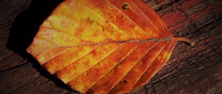 Impuls: Herbstblatt