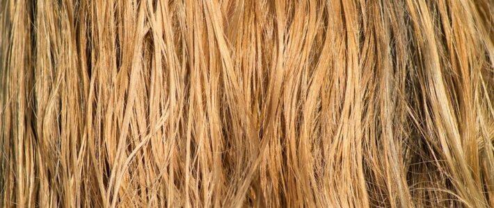 Impuls: Jedes einzelne Haar