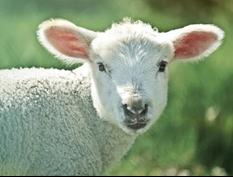 Kinderbrief: Karwoche und Ostern